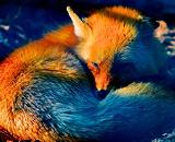 Вышла предварительная версия браузера Firefox 3.6