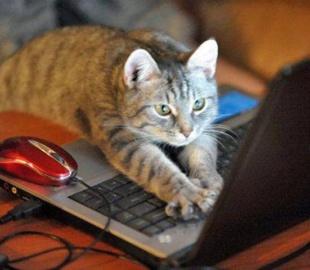 Как по государственному реестру «кошка походила»