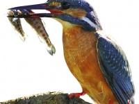 Эффективность поисковой оптимизации,  или  Как поймать синюю птицу?