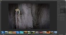 Подробности приложения для редактирования фотографий Project Nimbus от Adobe утекли в Сеть