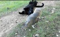 Удивительная дружба кота и совы покорила Интернет