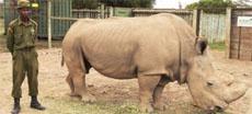 В сервисе знакомств появился вымирающий белый носорог