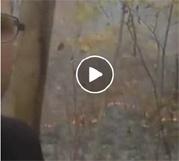 Метеоролог-любитель поджег лес ради просмотров в Facebook