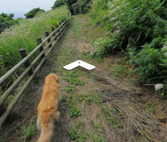 Любопытный пес увязался за камерой Google и попал на карту