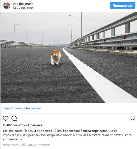 СМИ обсуждают кота Мостика, который «открыл» Крымский мост раньше доэтого Владимира Путина