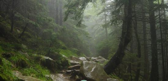 25bf7b5814005f-10---arpathian-forest-768x508_790x380.jpg (112 KB)