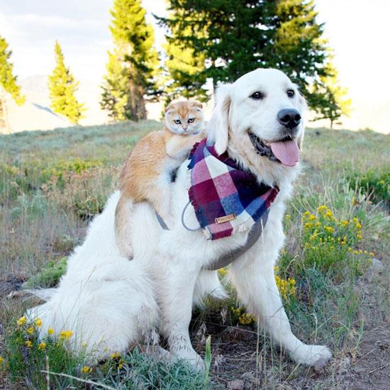 2Дружба взрослого пса и маленького вислоухого котенка очаровала Сеть 2.jpg (116 KB)