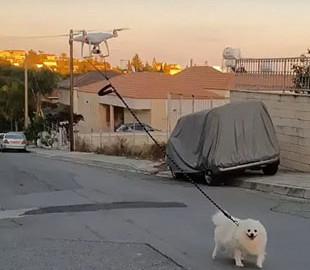 Мужчина выгулял собаку дистанционно с помощью беспилотника