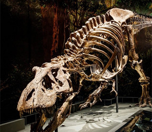 Комп'ютерне моделювання показало, як пересувався тиранозавр