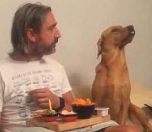 Пес, подглядывающий за трапезой хозяина, рассмешил пользователей
