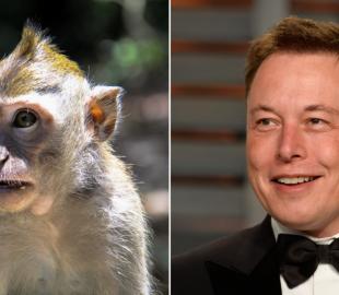 Neuralink Илона Маска показала как чипированная обезьяна играет в видеоигру